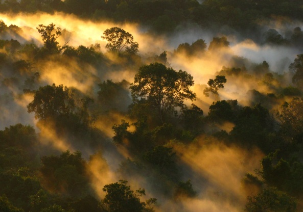 Amazon canopy at dawn, Brazil.
